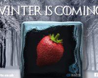 ** WINTER WINNERS **